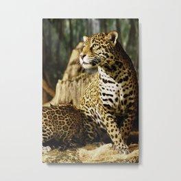Female Jaguar, Stella Metal Print