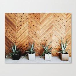 Cacti Modernism Canvas Print