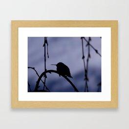 Hummingbird of the Shadow Framed Art Print