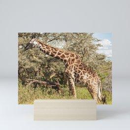African Giraffe Snacking - Serengeti Tanzania 5068 Mini Art Print