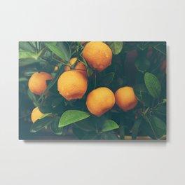 Sweet tangerines Metal Print