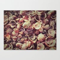 shells Canvas Prints featuring Shells by HooVeHee