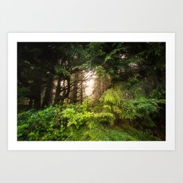 The Light Within - Beauty in the Washington Rain Forest Art Print