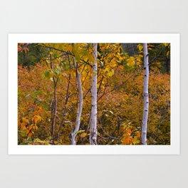 Birch/Bouleau Art Print