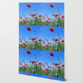 poppy flower no17 Wallpaper