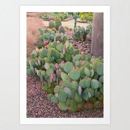 Prickly Pear Cactus Arizona Art Print
