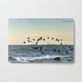Flying flock of cormorants Metal Print