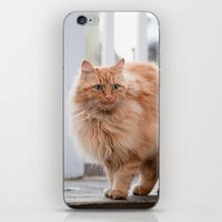 garfield iPhone & iPod Skins featuring Garfield by maisie ong
