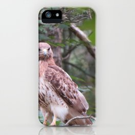 Hawk looking front iPhone Case
