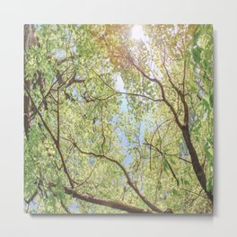 Canopy of trees with sun beaming through in vivid green and blue Metal Print