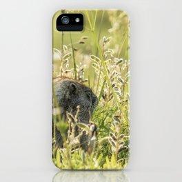 Hoary Marmot's Peek at Paradise iPhone Case