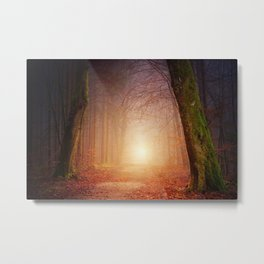 Foggy Forrest sunset Metal Print