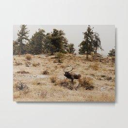 Elk Bugle Metal Print