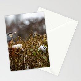 Nuthatch. Stationery Cards