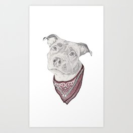 pitbull//dog Art Print