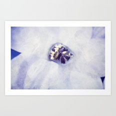 Hyacinth in White Veil Art Print