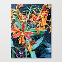 Red and Orange Skinny Petal Flowers Canvas Print