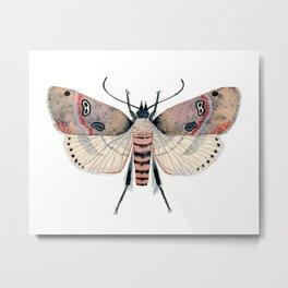 Sand Moth Metal Print