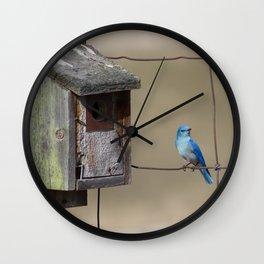 Mountain Bluebird at Home Wall Clock
