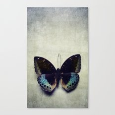 Vintage Butterfly 4 Canvas Print
