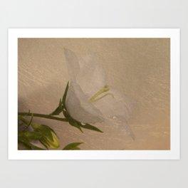 White Campanula Art Print