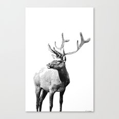 Mountain Elk Canvas Print