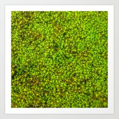 moss green II Art Print