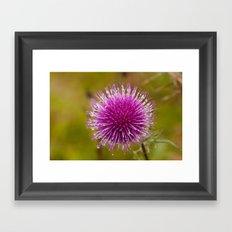 Thistle flower 6389 Framed Art Print