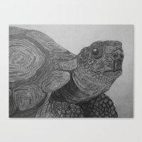 tortoise Canvas Prints featuring Tortoise by nosila.art