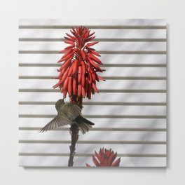 small bird in the country style white wood red flower Metal Print