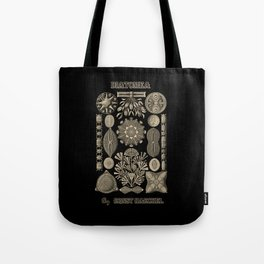 """""""Diatomea"""" from """"Art Forms of Nature"""" by Ernst Haeckel Tote Bag"""