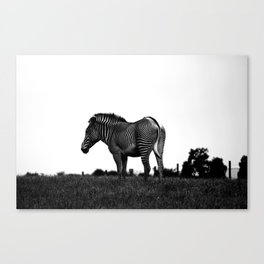 Zebra in its Colours Canvas Print