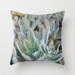 Graptoveria Study #1 Throw Pillow