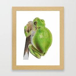 Plump Green Tree Frog Framed Art Print