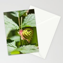 Young Salmonberry Photography Print Stationery Cards