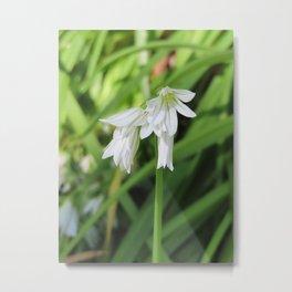 White Spring Flowers | Barwon Heads Print | Bellarine Peninsula Metal Print