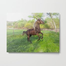 chocolate Rocky Mountain Horsesa Metal Print