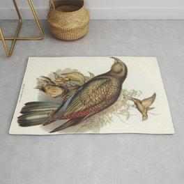 Kea Parrot (Nestor notabilis) illustrated by Elizabeth Gould (1804-1841) for John Goulds (1804-1881) Rug