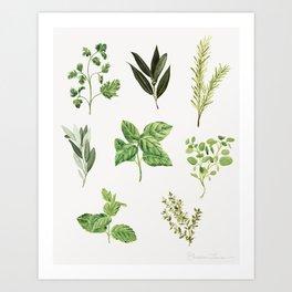 Delicate Herb Illustrations Art Print