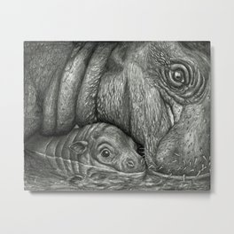 Baby Pygmy Hippo with Mother - Vulpecula Metal Print