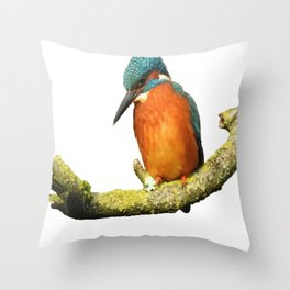 Stunning Kingfisher Vector Throw Pillow