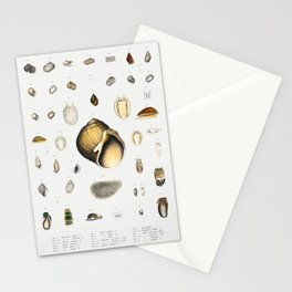 Sea snail varieties set  from Mollusca  Shells by Augustus Addison Gould Stationery Cards