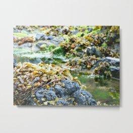 Seaweed Series 5 Metal Print