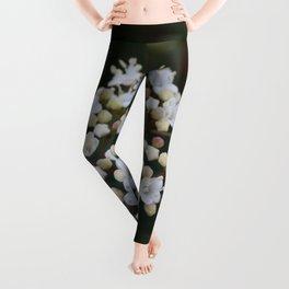 Viburnum tinus flowers and buds Leggings