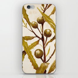 Sargassum iPhone Skin
