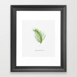 Pinus sylvestris Framed Art Print