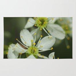 Apple blossom at spring Rug