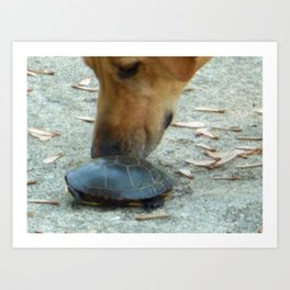 Curious Dog Painted Turtle Art Print
