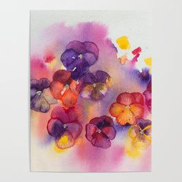 Spring watercolor flowers art colorful pansies Poster