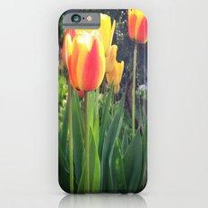 Spring Tulips in Bloom iPhone 6s Slim Case